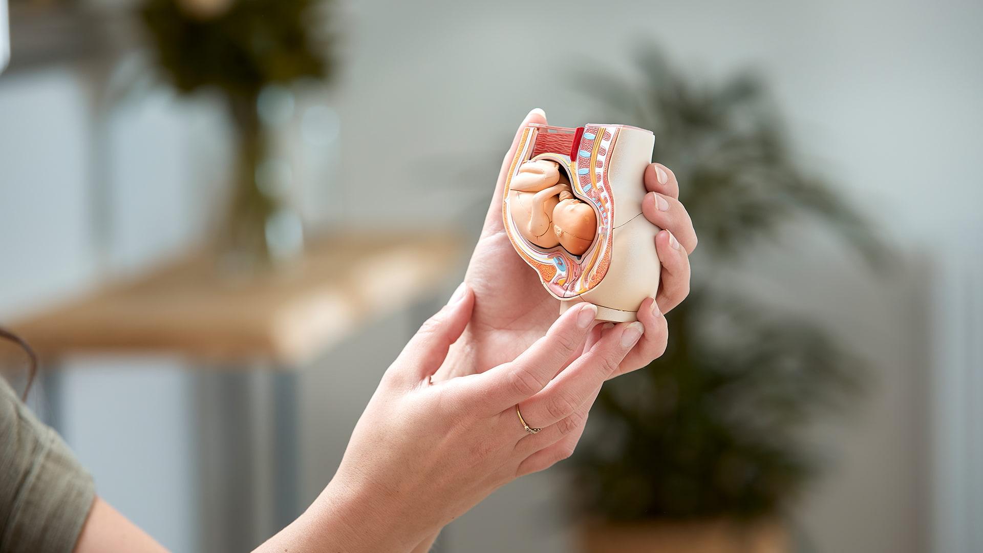 Model af foster ved tidlig scanning